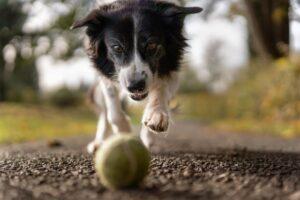 Jak wyciągnąć kleszcza psu