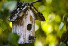 jak zrobić karmnik dla ptaków
